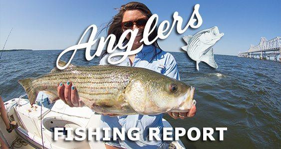 main anglers  7.28.15