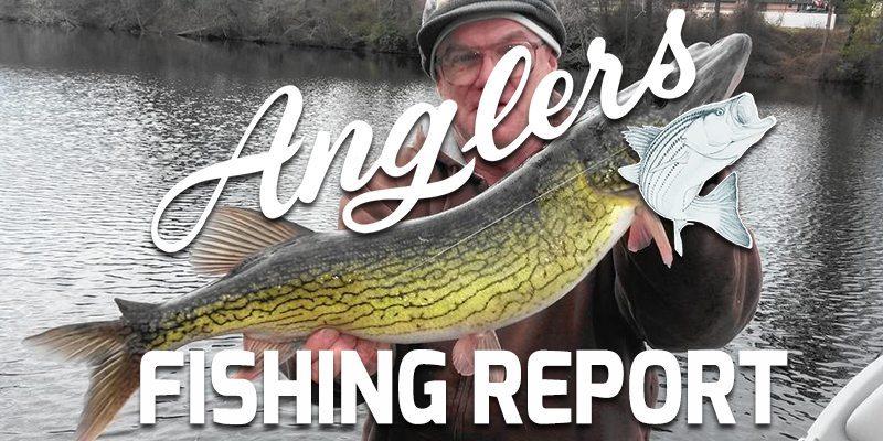 Chesapeake bay fishing report november 16 2015 anglers for Fishing in november