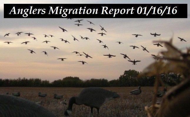 Migration Report 01/16/2016